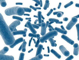 friendly bacteria to eat urine